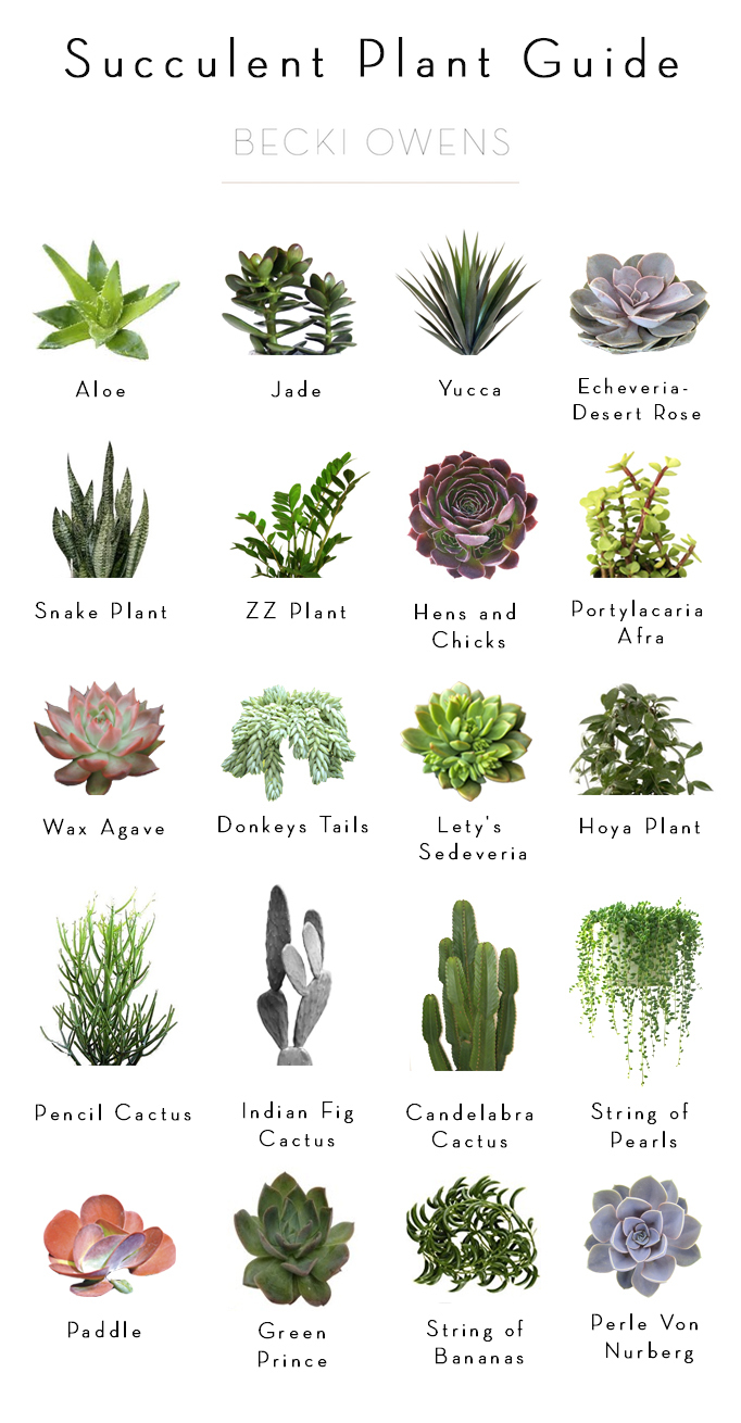 Styling tipspagesepsitename - Indoor water plants list ...